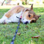 アウトドアや散歩に潜むリスク!愛犬と家族に危険をもたらすマダニ…被害にあわないための対策3つ