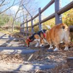犬との散歩でNGな拾い食い予防法とは?