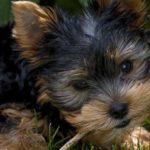 愛犬がシャンプー好きになるためにするべき5つのこと