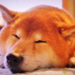 お留守番する愛犬のための環境づくりのポイント5つ
