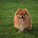 【嫌がる理由別】犬のブラッシング克服法