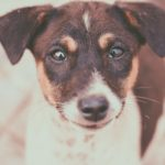 犬のしつけ効果UPのコツは褒め言葉にあり。実践必須の2STEPとは?
