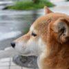 雨の日も犬の散歩は必要?楽しむコツと4つの注意点【獣医師監修】