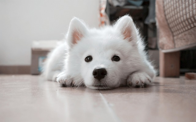 リラックスしているので穏やかに褒められている犬