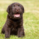 犬のしつけに効果的な褒め方のコツ5選!【獣医師監修】