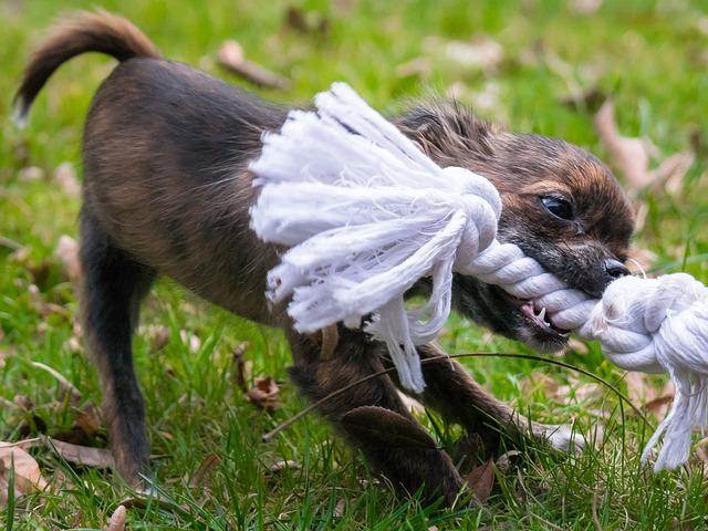 本能を刺激する遊び方をする子犬