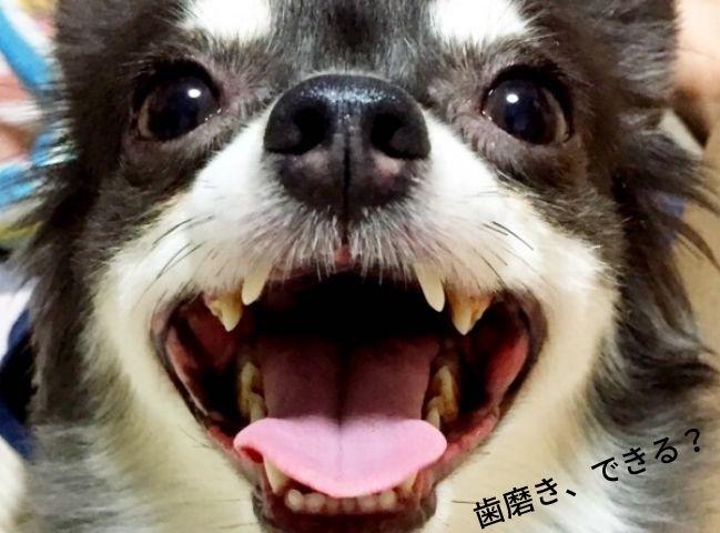 歯磨きを嫌がる犬