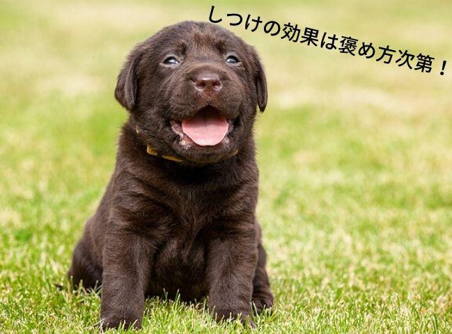 しつけに効果的な褒め方をされている犬