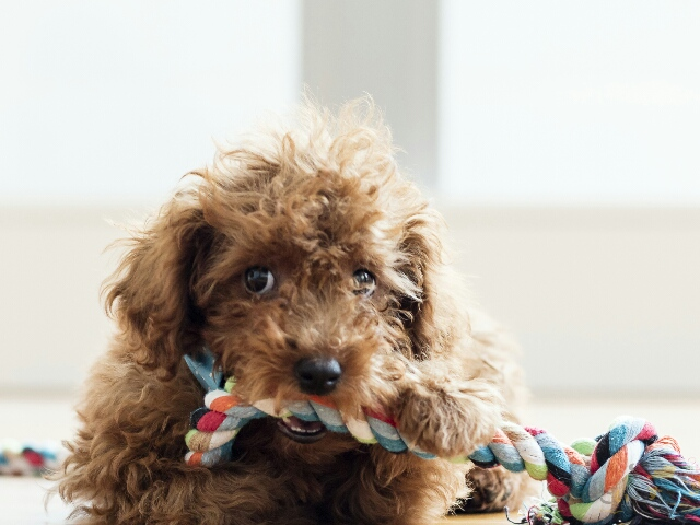 遊んでいるという当たり前の行動を褒められている犬