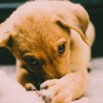 遊んでいると子犬が手を噛む!その時するべきことは?【獣医師監修】