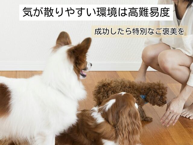 難易度の高い環境で練習して特別なご褒美をもらう犬