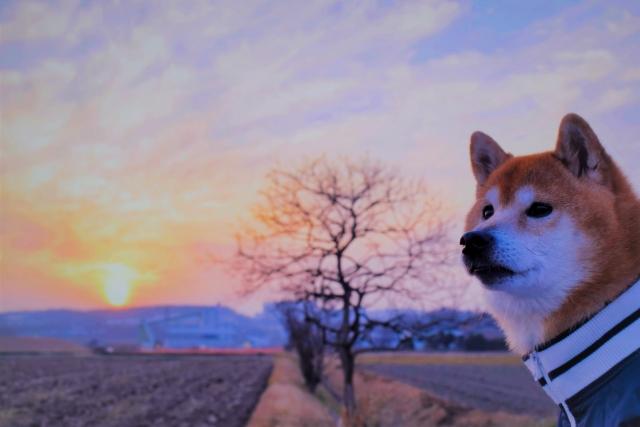 寒さ対策をして散歩している犬