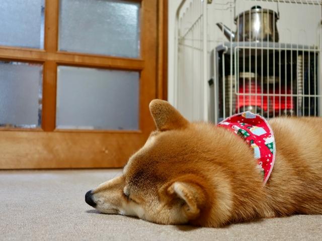 ストーブガードを設置したストーブで寒さ対策している犬