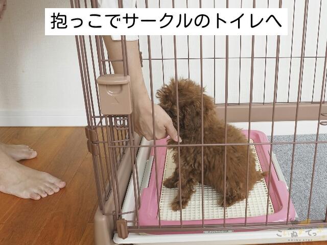 遊んだあとのタイミングで抱っこでトイレに来た子犬