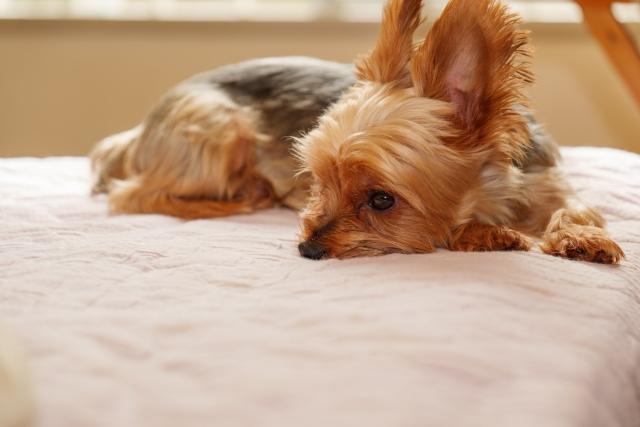 体罰を受けずニーズを満たされている犬