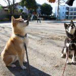 気になる犬の認知症。症状と予防のためにできること【獣医師監修】