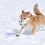 犬にも防寒対策は必要なの?方法は?【獣医師監修】