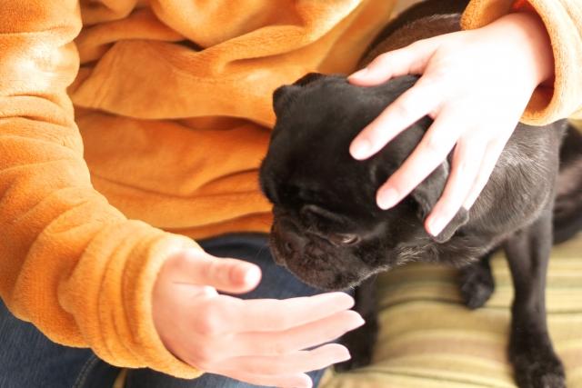 インフルエンザの飼い主と犬