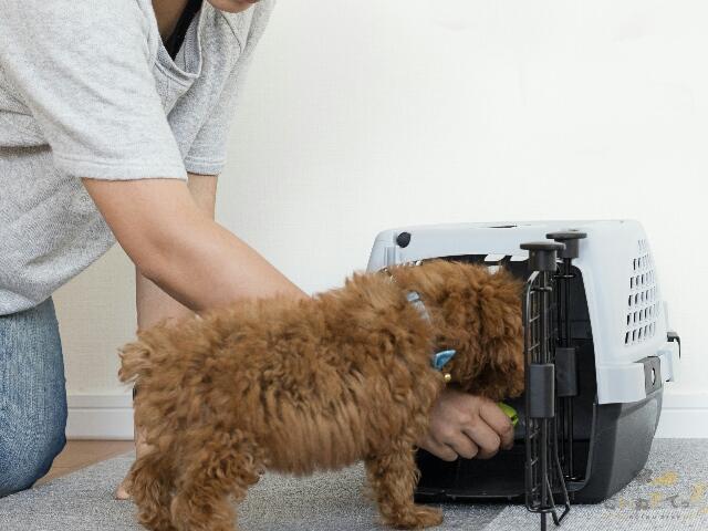 好物を使ってハウスの練習をする犬
