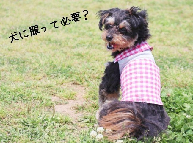 服が必要な犬