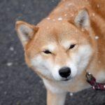 寒い日も犬と散歩をしたほうがいい?気を付けることは?【獣医師監修】