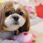 愛犬の寒さ対策について確認しておこう!【獣医師監修】