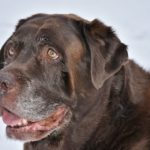 高齢犬に表れる見た目の変化とは?【獣医師監修】