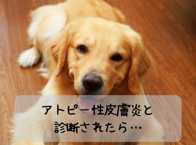 アトピー性皮膚炎と診断された犬