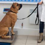 愛犬の肥満度を知りたい!犬にもBMIはあるの?【獣医師監修】