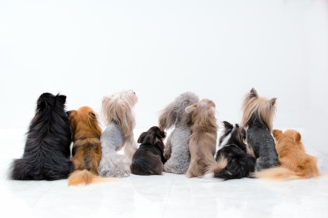 様々な体格の犬