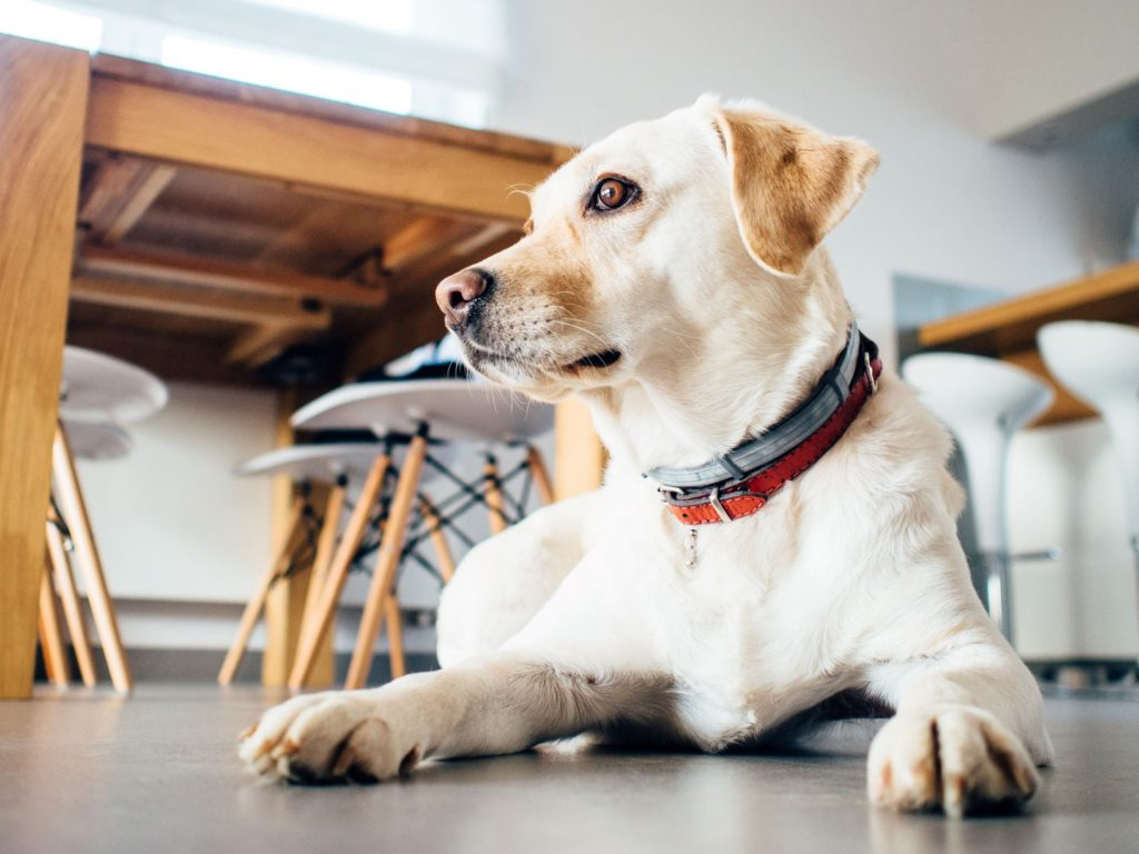便利グッズのある家で暮らす犬