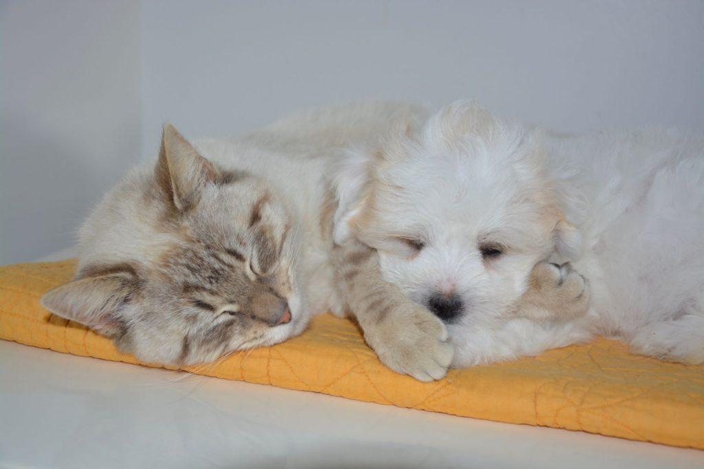 昼寝をする猫と子犬