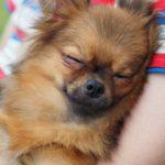 今日から「具体的に」考えて行動を。愛犬のための災害対策5つ