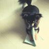 愛犬がペットシーツで遊んでグチャグチャにするときの対処法【獣医師監修】