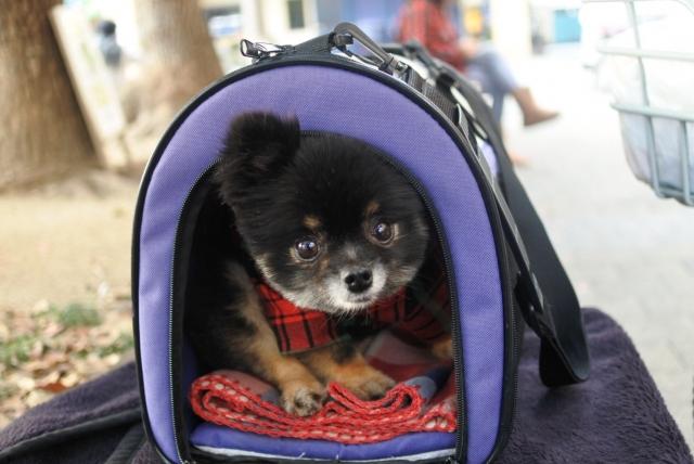 旅に必要なクレートトレーニングができている犬