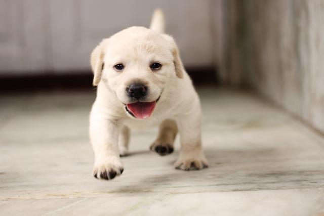 満足するまで遊んでいる子犬