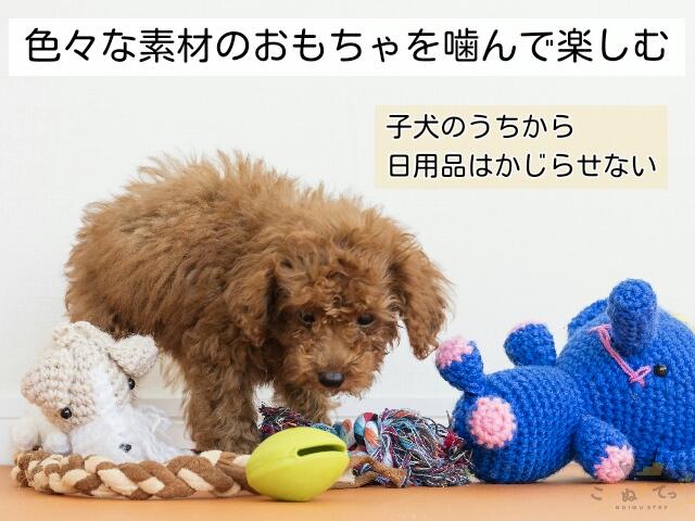 甘噛み予防のために噛んで楽しむためのおもちゃがたくさんある子犬