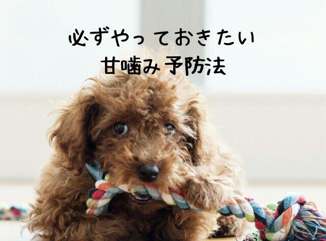 甘噛み予防法のひとつであるおもちゃをかじる子犬