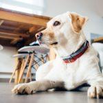 室内犬と快適に暮らすヒント!用意したい便利グッズとは?