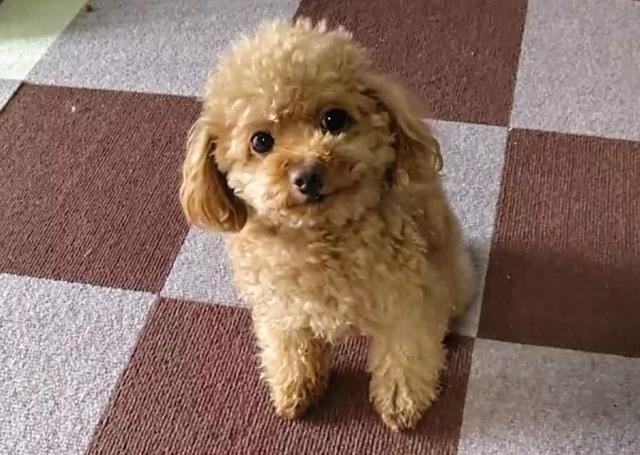 偶然おすわりで落ち着いている子犬