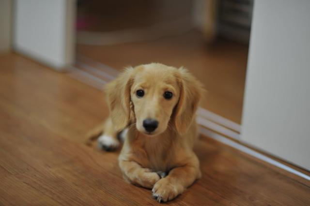 出発前のルーティーンを見ている犬
