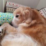 視力の衰えた愛犬が安心して楽しく暮らすためにできること【獣医師監修】