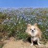 愛犬と旅を楽しむため。今すぐ復習したい基本のしつけ5選【獣医師監修】
