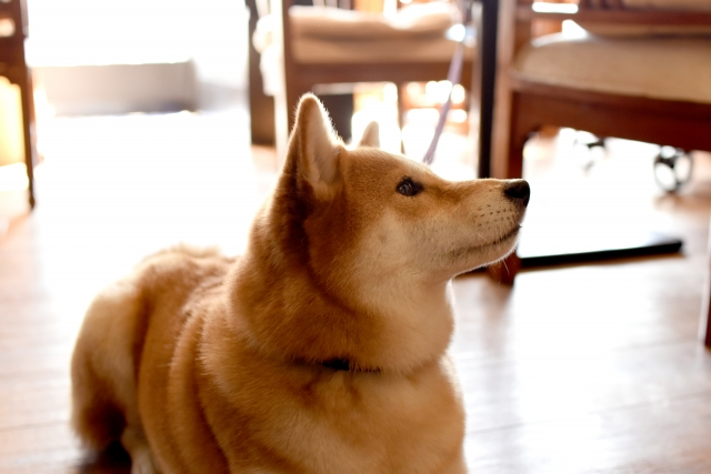 旅に必要なカフェトレーニングができている犬