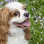 犬の熱中症対策で見落としがちな5つのポイント【獣医師監修】
