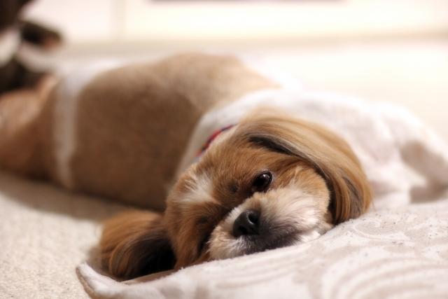 愛犬の健康管理に重要な毎日の健康チェック
