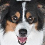 愛犬が「おいで」で戻ってこない…呼び戻しの成功率を下げるNG行為5選【獣医師監修】