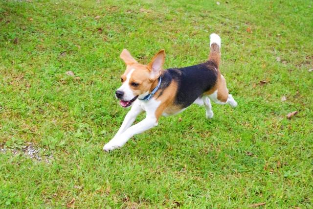 愛犬の健康管理に重要な健康的な生活