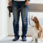 愛犬のお散歩デビューの前からしておいて!リードの装着練習【獣医師監修】