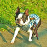 犬との散歩で感染の可能性が…「ダニの予防」で愛犬と家族の命を守りましょう